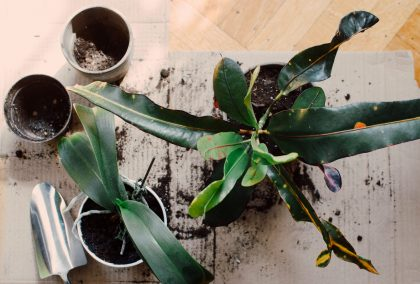plants and mental health